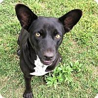 Adopt A Pet :: Macey - Godley, TX