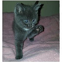 Adopt A Pet :: Kingsford     170869 - Atlanta, GA