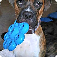 Adopt A Pet :: Fletcher - Indianapolis, IN