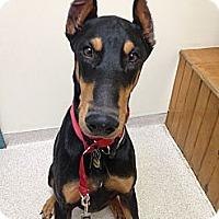Adopt A Pet :: Drew - New Richmond, OH