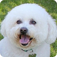 Adopt A Pet :: Dollie - La Costa, CA