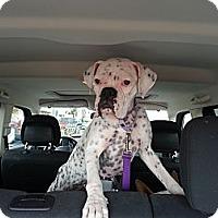 Adopt A Pet :: Addie - Santa Monica, CA