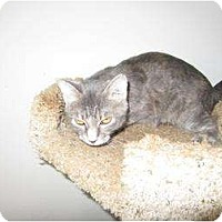 Adopt A Pet :: Aurora - Mobile, AL