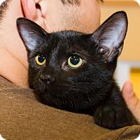 Adopt A Pet :: Mary - Irvine, CA