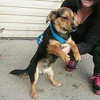 Adopt A Pet :: barker - Prestonsburg, KY