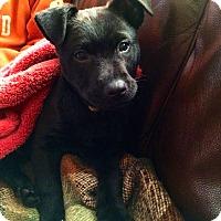 Adopt A Pet :: Oliver - Randolph, NJ
