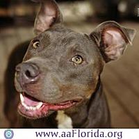 Adopt A Pet :: Roma - Pensacola, FL