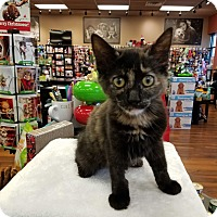 Adopt A Pet :: Taylor - Turnersville, NJ