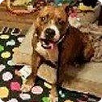 Adopt A Pet :: BELLE - Hampton, VA
