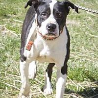 Adopt A Pet :: Ellie - Bedford, IN