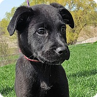 Adopt A Pet :: Ode - Grayslake, IL