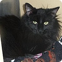 Adopt A Pet :: Rielle - Logan, UT