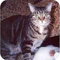 Adopt A Pet :: Aimee - Clementon, NJ