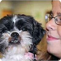 Adopt A Pet :: Sassy - Rigaud, QC
