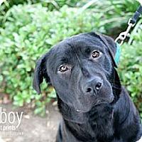 Adopt A Pet :: Alex - Mission Viejo, CA