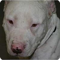 Adopt A Pet :: Murdock - DFW, TX