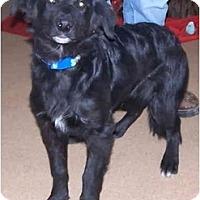 Adopt A Pet :: Nugget - Toronto/Etobicoke/GTA, ON