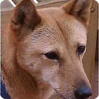 Adopt A Pet :: Scout - Southern California, CA