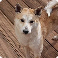 Adopt A Pet :: Kai - Manassas, VA