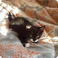 Adopt A Pet :: Bella - Colmar, PA