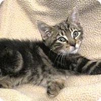 Adopt A Pet :: Fred - Lebanon, PA