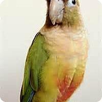 Adopt A Pet :: turkey bird - Independence, KY