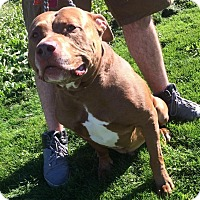 Adopt A Pet :: TONKA- foster or forever home - Brunswick, ME