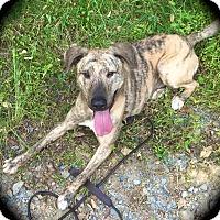 Adopt A Pet :: Bennett - Ijamsville, MD