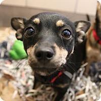 Adopt A Pet :: Arthur - Alpharetta, GA