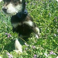 Adopt A Pet :: Leo - Hamilton, ON