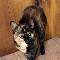 Adopt A Pet :: Jewel - Staten Island, NY