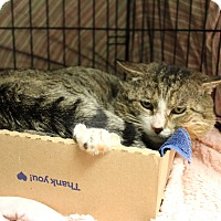 Adopt A Pet :: Louie - Warwick, RI
