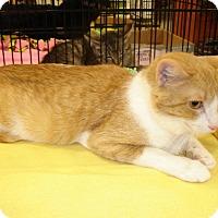 Adopt A Pet :: Honey - Overland Park, KS