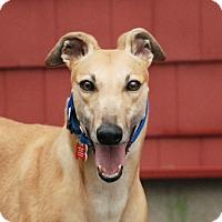 Adopt A Pet :: Sandy - Ware, MA