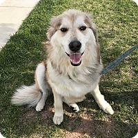 Adopt A Pet :: Foster - Point, TX
