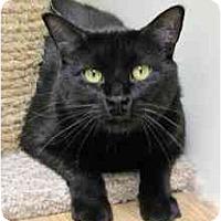 Adopt A Pet :: Cole - Milwaukee, WI