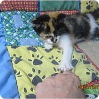 Adopt A Pet :: Arabella - Sterling Hgts, MI