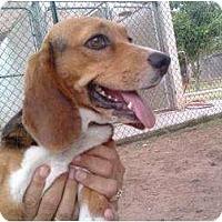 Adopt A Pet :: Miss Princess - Phoenix, AZ