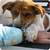 Adopt A Pet :: Dugal - Phoenix, AZ
