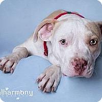 Adopt A Pet :: Mr. Wiggles - Phoenix, AZ
