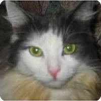 Adopt A Pet :: Sammy - Syracuse, NY