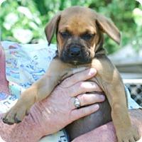 Adopt A Pet :: Charles - Providence, RI