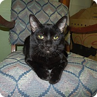 Adopt A Pet :: Emerson - Medina, OH