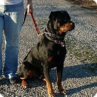 Adopt A Pet :: Finn - Courtesy Post - Toledo, OH