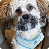 Adopt A Pet :: LUIGI - New Windsor, NY