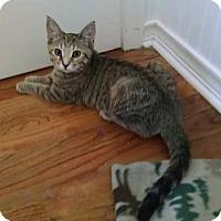 Adopt A Pet :: Billie Girl - Davison, MI
