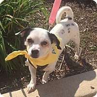 Adopt A Pet :: Pokey - Beavercreek, OH