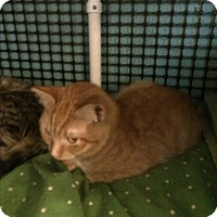 Adopt A Pet :: Char - Roseburg, OR