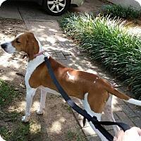 Adopt A Pet :: Daisy - Waxhaw, NC