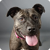 Adopt A Pet :: Elsa - Columbia, IL
